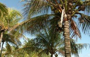 Garden Maya Caribe Beach House Hotel